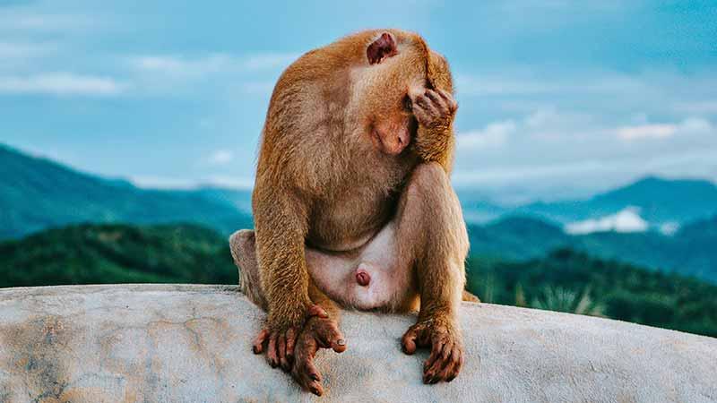 Гора Обезьян (Monkey Hill) - обзорная площадка в Пхукет Тауне